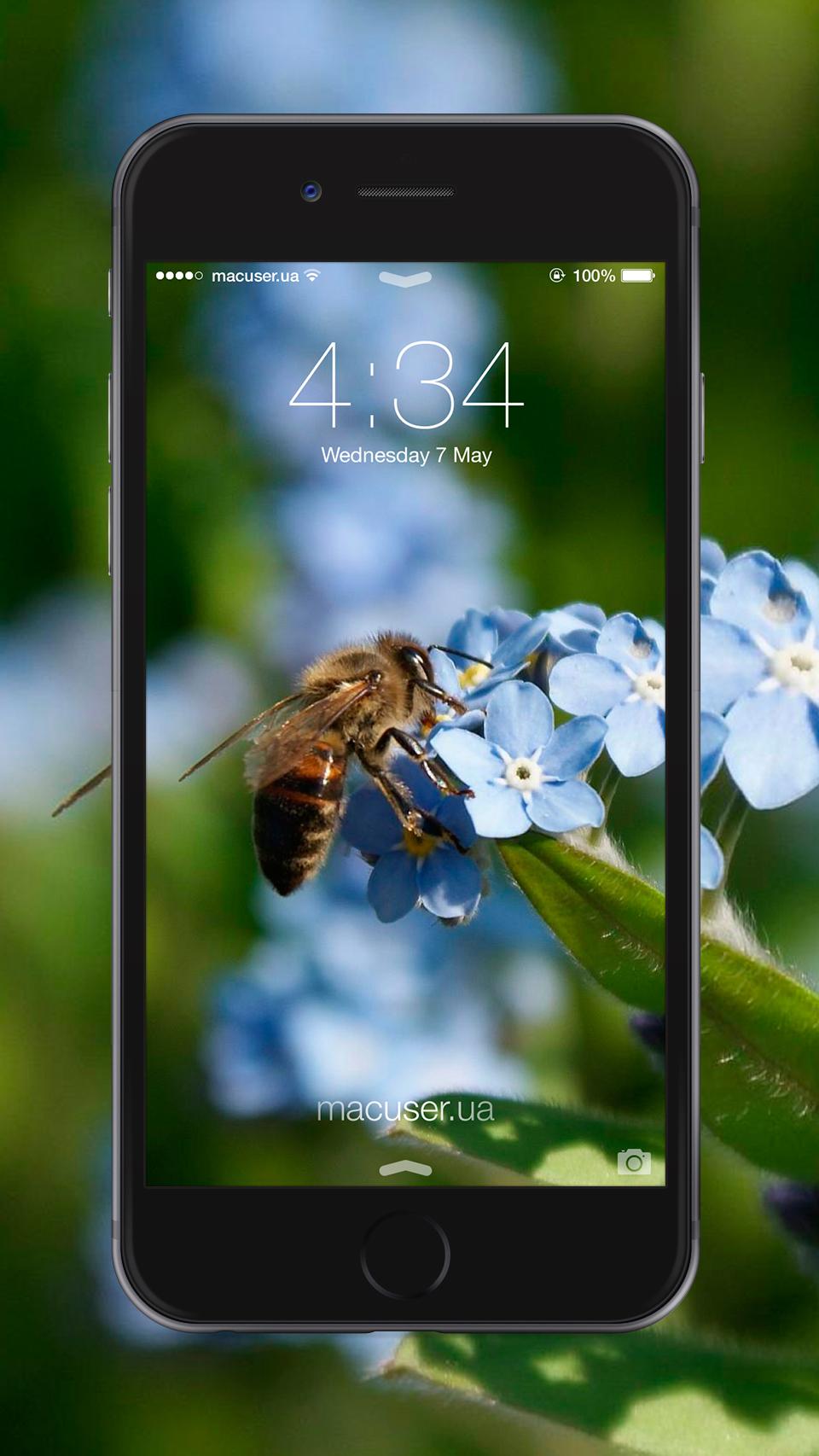 Обои пчела